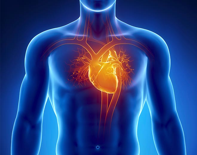 Cardiology-Human-Body-Heart-Chest-Pain