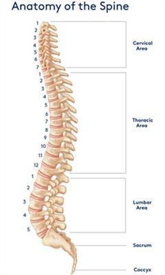 anatomy-of-the-spine